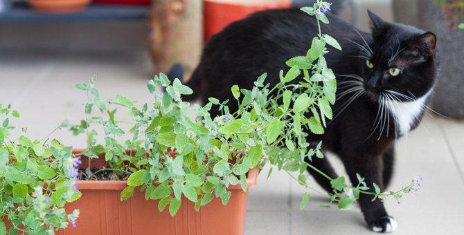 猫よけトゲトゲシートの効果と選び方のポイント
