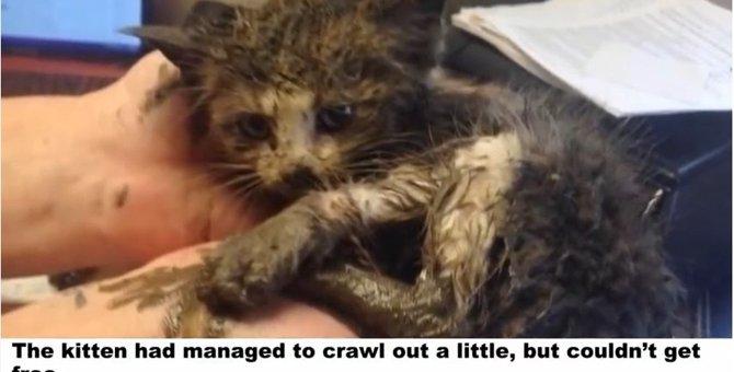泥水の中で動けなくなっていた子猫の運命は?