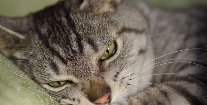 猫が不幸になる絶対NG行為5選