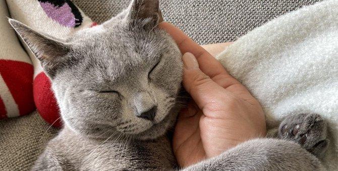 『幸せな猫』がする行動3選!愛猫の幸福度を高める方法とは?
