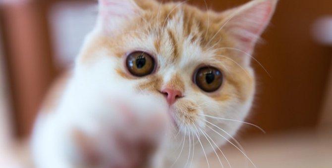 ニャンフェスに行こう!大人気の猫イベント