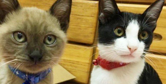 暴れん坊の先住猫がメロメロ!子猫ぺーちゃんとの出会い♡