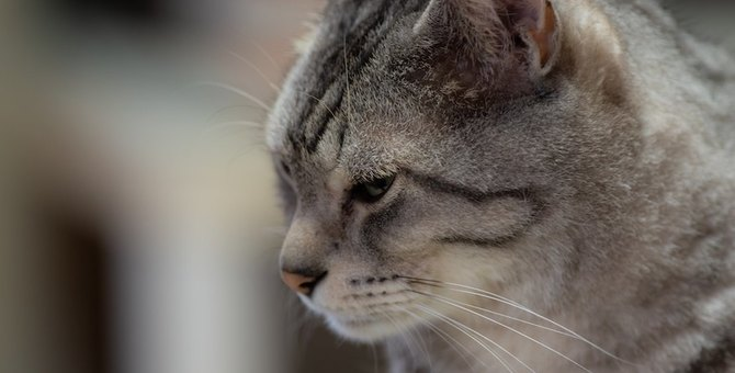 猫が飼い主に『嫌われた』と誤解してしまう行動5選