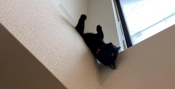 お、お客様ー!アクロバティックな黒猫さんが話題!