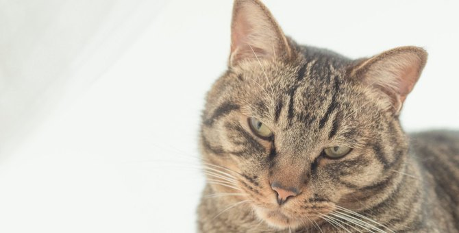 『脱走しやすい猫』の特徴5つ!飼い主が早めにすべき対策とは?