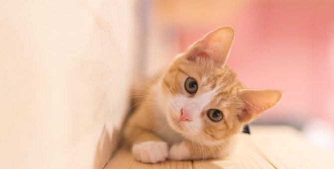 猫とよく目が合う理由とは?6つの気持ち