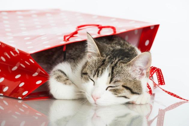 飼い主が袋やダンボールを触ると猫が寄ってくるのはなぜ?4つの心理