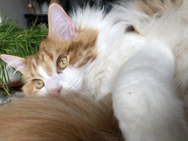 猫が尻尾を飼い主にすりつけてくるのはぜ?5つの気持ち