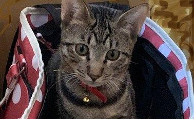 動物病院が苦手な猫のためにストレスを軽減する対策5つ