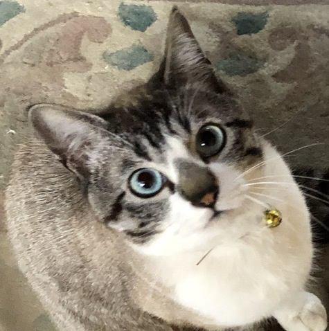 猫が人に気を遣っていると感じる瞬間7つ