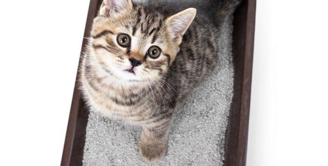 猫が便秘になる原因や症状と解消する方法