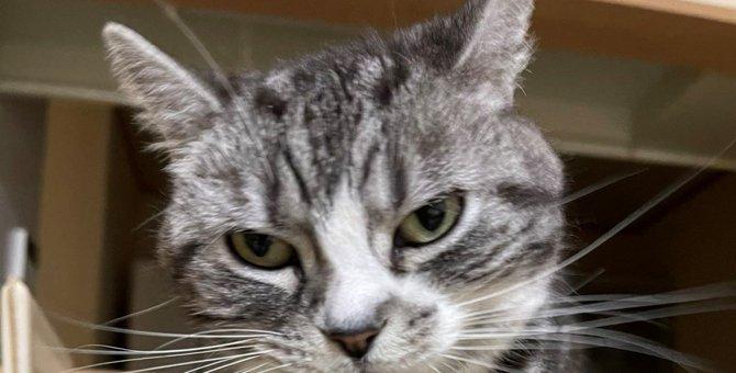 これぞ究極!投稿された『ツンデレ』を地で行く猫が大人気♡