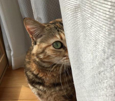 猫が飼い主のことを嫌いになった時にする行動4つ