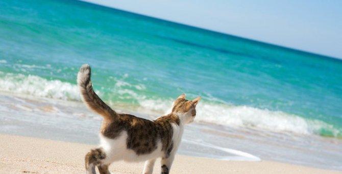 猫に有害な不凍液(エチレングリコール)の危険性と誤飲した時の症状について
