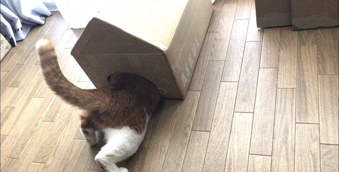 遊びに!隠れ家に!簡単手作りキャットハウス