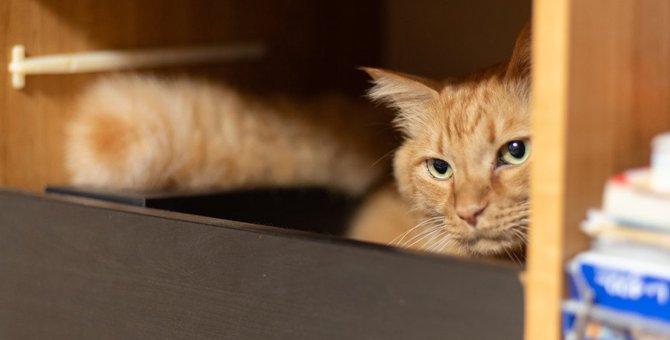 猫が隠れて出てこない5つの理由と対処法