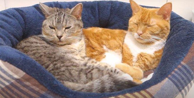 6歳の誕生日を迎えた猫ちゃん♪仲良くベッドでくつろぐ姿が可愛い♡