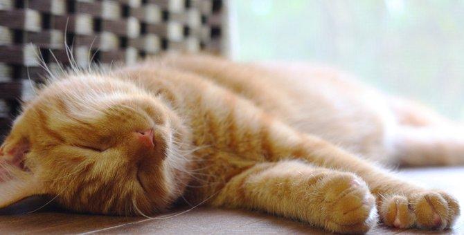 猫がミネラル不足になると陥る6つの弊害