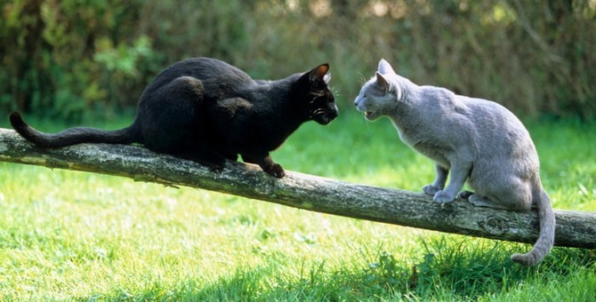 猫が威嚇する理由と対策について