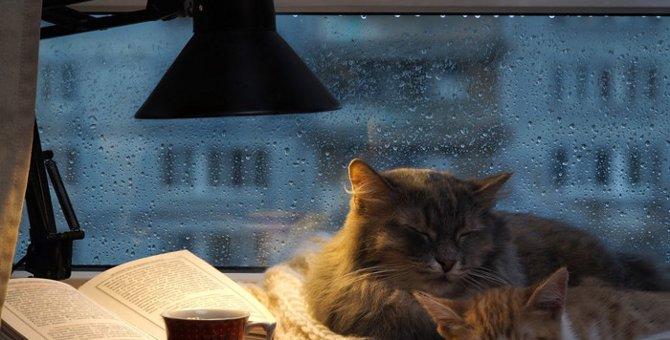迷い猫になる原因と探し方について