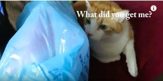 猫飼いあるある。買ってきた人形に興味を示さない猫