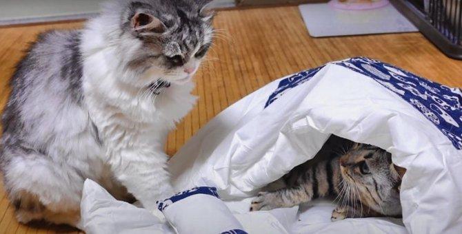 和風が好みなの?猫用布団に集まる猫さんたち!