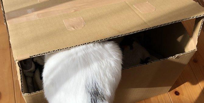 """""""スキマ""""がポイント!猫のダンボールハウスを手作りしてみよう♪"""