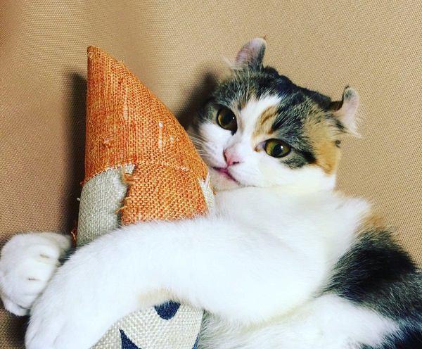 猫はお留守番が得意なの?