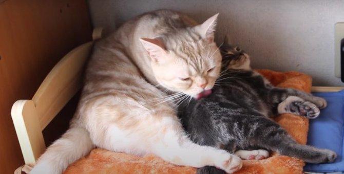 可愛さ放出中♡微笑ましい猫ちゃんの毛づくろい