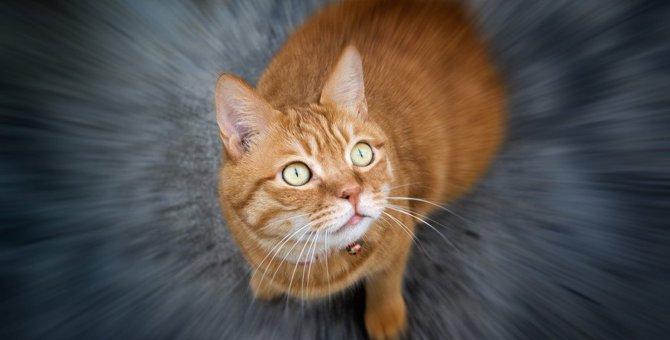 身近にある物が危険!猫にとって害のある9つの物