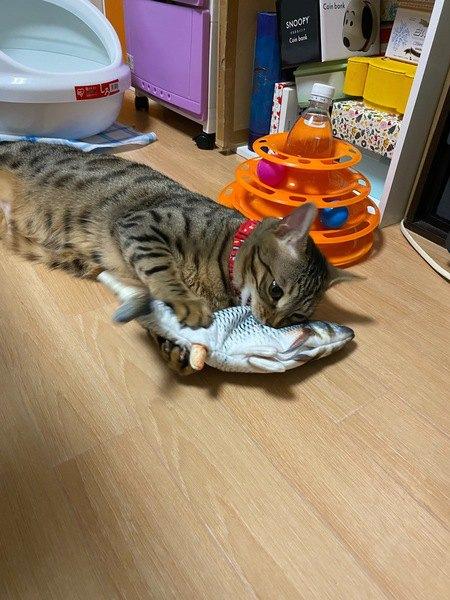 【猫あるある】家の中で猫が『狩りがちな物』4選