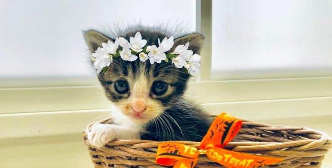 猫がいても飾ってOKな『生花』5選