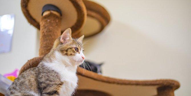猫がキャットタワーを使わなくなった時に考えられる原因5つ