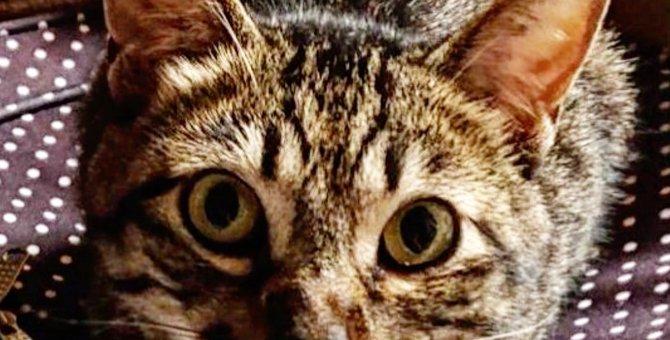 やんちゃなオス猫が我が家に仲間入り
