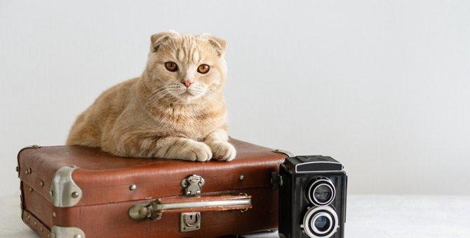 猫の『飼い主が外泊』するときに検討すべき対処法5つ