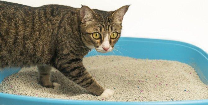 猫がトイレを我慢してしまう理由4選!気持ち良くトイレをしてもらうには?