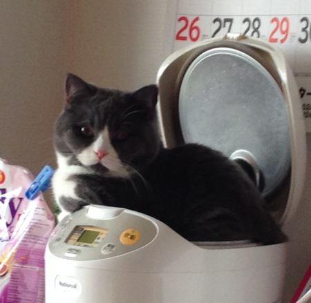 やめて!猫が炊飯器の上に乗るのをやめさせる方法