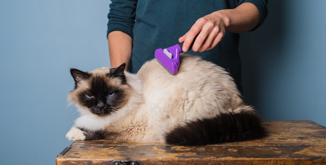 猫にブラッシングは必要です!嫌がる時の対策と毛球症予防について