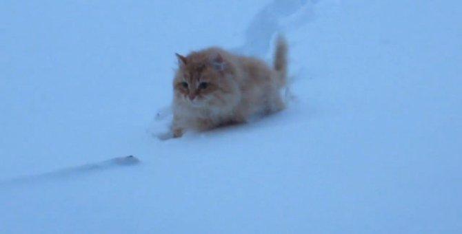 ロシアの猫ちゃん、雪の中をクロールで進む!