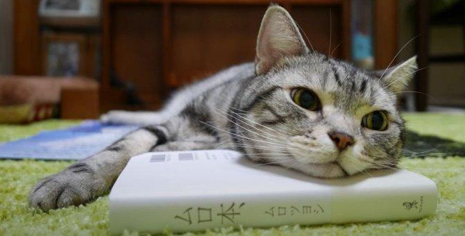 まさかの反撃に、猫ちゃんも思わず声が漏れる?