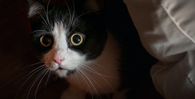 こんな行動はNGです!猫を不安にさせる飼い主の行動5つ