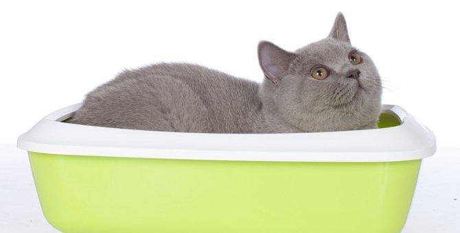 猫がトイレで寝る理由と対策