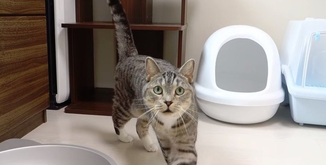 可愛い声でご飯をおねだり♪アピールを頑張る猫ちゃん達