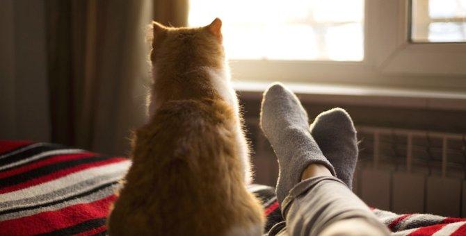 猫は背中で語る…飼い主に後ろ姿を見せる理由がぐっとくる♡