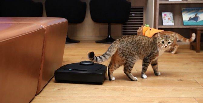 人気猫カフェでも導入!換毛期の悩みを解決してくれるロボット掃除機