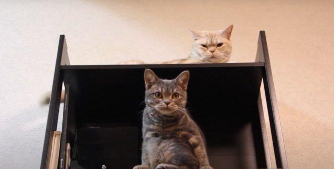 ダイエット開始から2週間!気になる猫ちゃんの体重は?