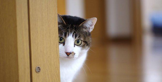 猫が『関わりたくない』と思う飼い主の特徴5つ
