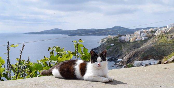猫たちに囲まれた幸せな暮らしができる!!ギリシャで本当にあった求人