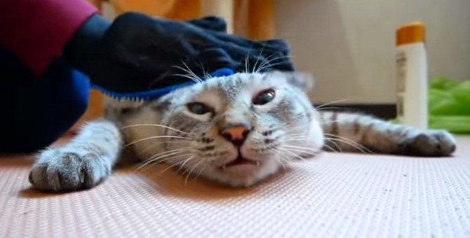 """猫ちゃん恐怖の""""アレ""""タイム…の前に、ブラッシングをしちゃましょ!"""