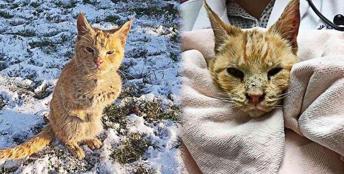 先天性の奇形を患う野良猫…永遠の家族と出会い幸せに!